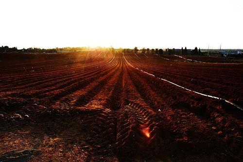 Comment l'acidité des sols affecte-t-elle la croissance des plantes?