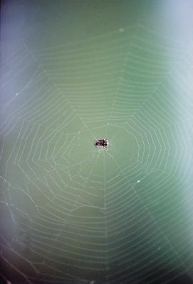Comment puis-je identifier les araignées par leurs sacs d'oeufs?