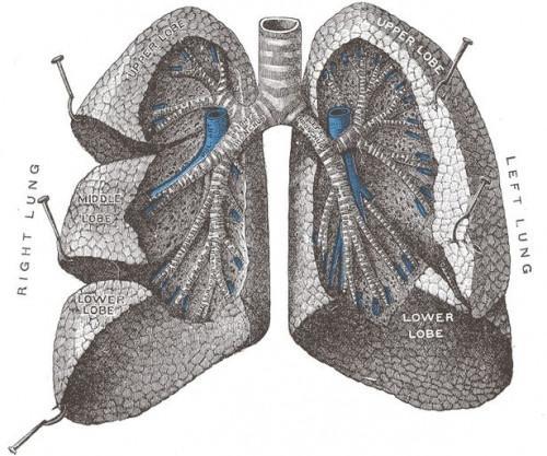 Tutorial Physiologie respiratoire
