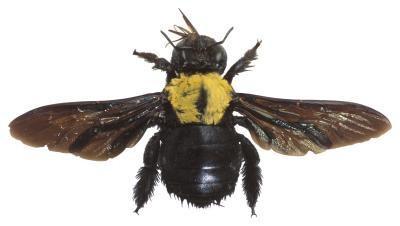 Les grands insectes piqueurs aux États-Unis