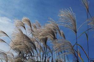 Quelles sont les causes des courants de convection et Winds?
