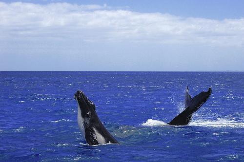 Cycle d'une baleine de vie