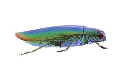 Comment préserver morts coléoptères dans une boîte