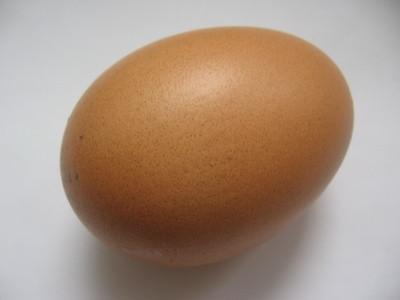 Des idées pour un projet d'Expo-sciences sur les œufs