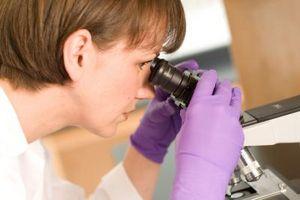 Qu'est-ce que Grossissement sur un microscope?