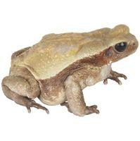 Comparaison entre les Squelettes de Frogs & Humans