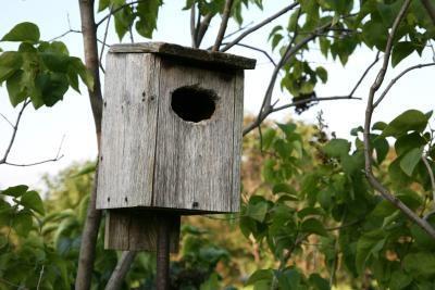 Instructions pour nettoyer Nichoir d'un oiseau