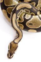 Types Python