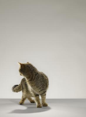 Qu'est-ce que Fréquences Cats peuvent entendre?