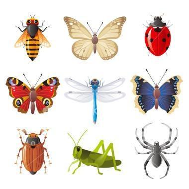 A propos de Insectes