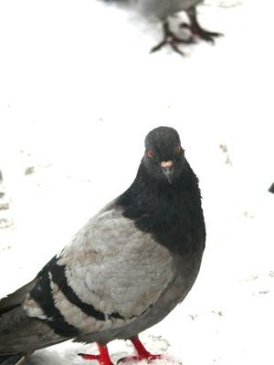 Comment se débarrasser des pigeons Humainement