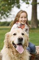Un chien Recommandé pour les adolescents