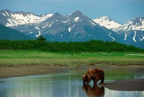 Cadeaux alimentaires Alaska