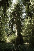 Tempéré Rain Forest Biome Caractéristiques