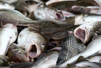 Liste des meilleurs appâts pour la pêche