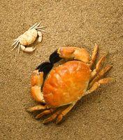 Que font les crabes de sable Eat?