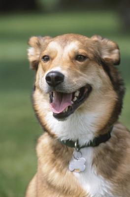 Les différences et similitudes entre les chiens Vs. Bunnies
