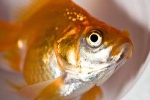 Cinq catégories de poissons