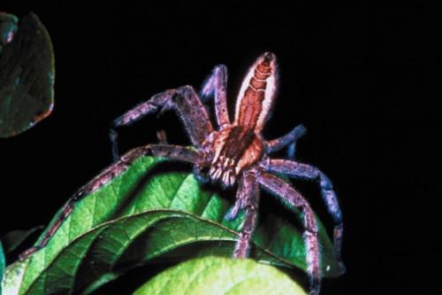 Spiders à Fayetteville, Géorgie