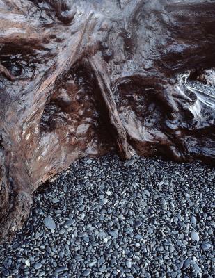 Discutez Trois types de Fossiles et comment ils sont formés