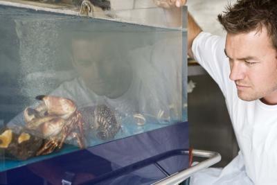 Comment faire pour supprimer la Silicon d'un aquarium