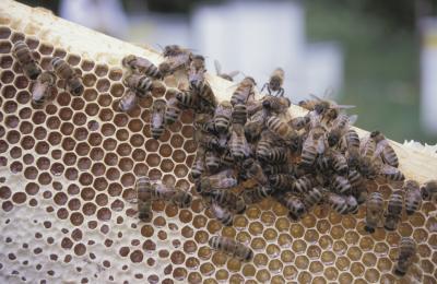 Comment construire une abeille Maison Mason