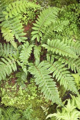 Les caractéristiques des organismes vivants qui dépendent du métabolisme
