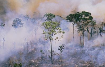 Quelle est la différence entre une forêt et un Jungle?