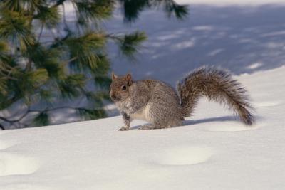 Comment préserver Squirrel Tails
