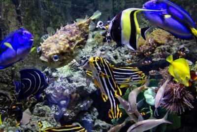 Quelle est la température de l'eau douce Bonne Tropical Fish?