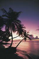 Comment Jeu de lumières sur Palm Trees