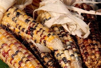 Ce que les pèlerins Ate à la première Thanksgiving