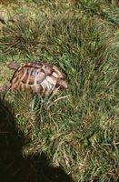 Différentes espèces de tortues