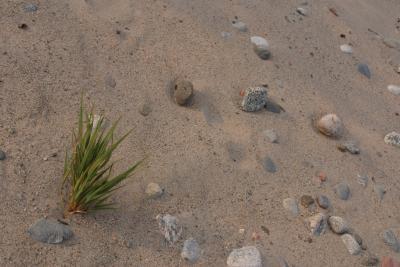 Pour cent de l'air dans différents types de sol