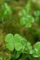 Des idées pour la Journée Déjeuner de Green St. Patrick
