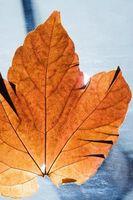 Comment faire un bouquet de mariée avec des feuilles d'automne