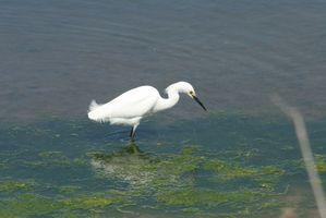 Comment faire pour trouver les zones humides protégées