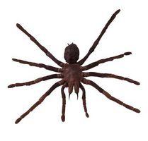 Les araignées communes dans PA