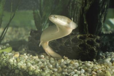 Comment attraper une anguille avec une canne et moulinet