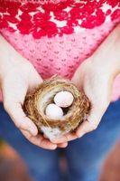 Quels sont les différents types de nids d'oiseaux?