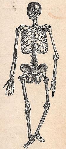 Structure du squelette humain
