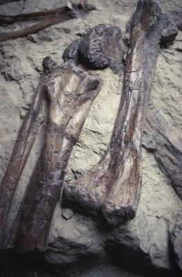 Quels sont les quatre différents types de Fossiles?