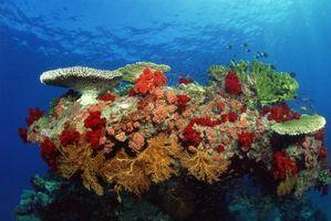 Les effets du chlorure sur les organismes aquatiques