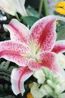 Bouquets de mariée idées avec Stargazers et Rose Roses