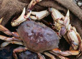 Comment garder Deux crabes dans un seau