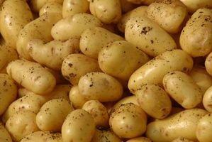 Instructions pour une horloge de pommes de terre