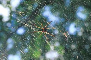 Combien d'espèces d'araignées sont trouvées dans l'Ohio?