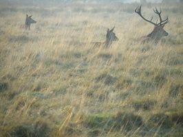 Maison de Deer Scent