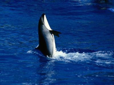 Quelles sont les différences entre les dauphins, marsouins et Fish?