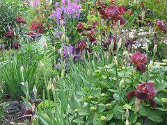 Différentes parties de plantes et ce qu'ils font